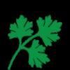 cilantrofresh- coriander.png